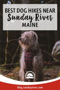 Hiking trails for dogs in bethel area near Sunday River, Maine