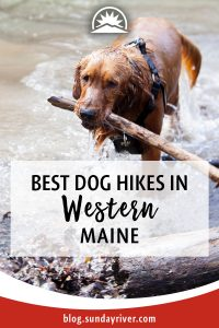 Best hikes with dogs near Bethel and Sunday River